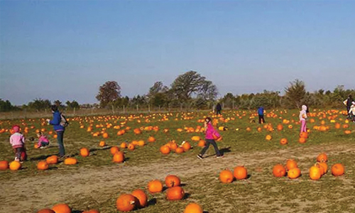 Popcorn and a movie at the pumpkin patch | toledo bend lake country.