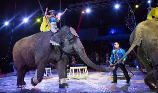 68th Annual Zenobia Shrine Circus